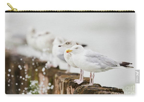 European Herring Gulls In A Row  Carry-all Pouch