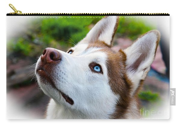 Expressive Siberian  Husky Photo C62017 Carry-all Pouch