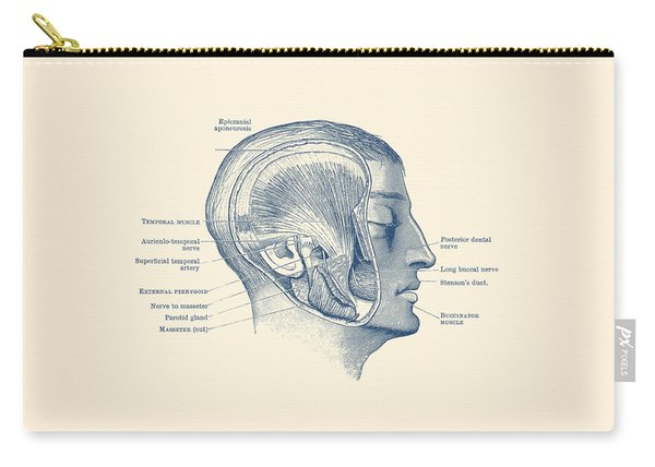 Face Muscular Diagram - Vintage Anatomy Print Carry-all Pouch