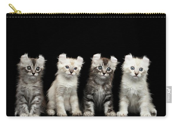 Four American Curl Kittens With Twisted Ears Isolated Black Background Carry-all Pouch