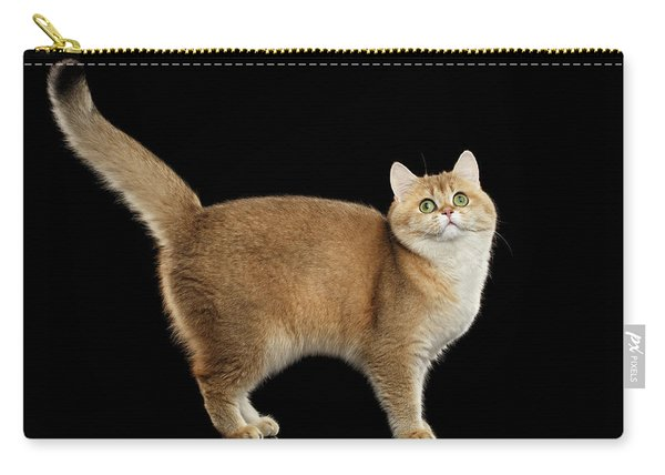 Funny British Cat Golden Color Of Fur Carry-all Pouch