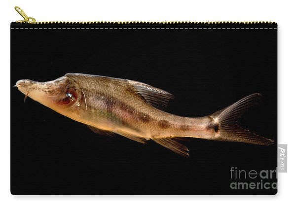 Golden Line Barbel Carry-all Pouch