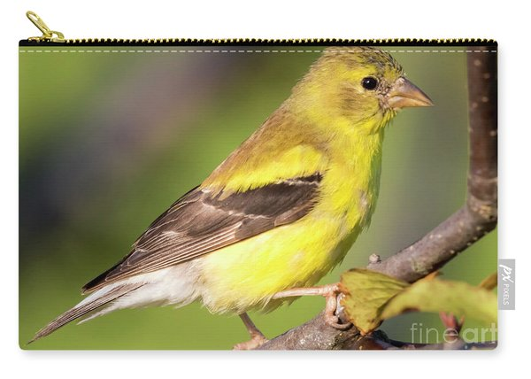 Goldfinch In The Early Morning  Carry-all Pouch