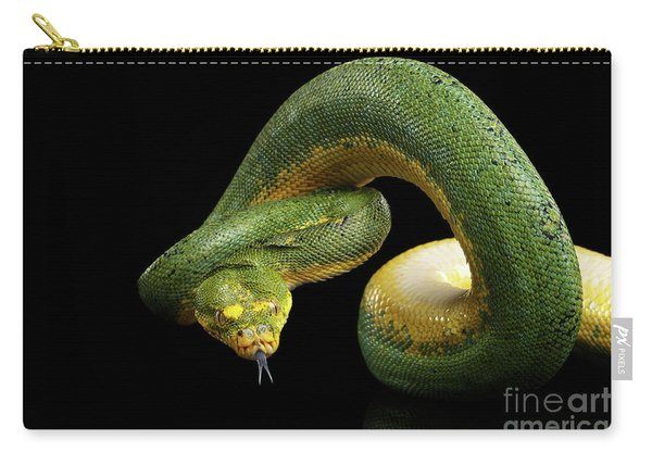Carry-all Pouch featuring the photograph Green Tree Python. Morelia Viridis. Isolated Black Background by Sergey Taran