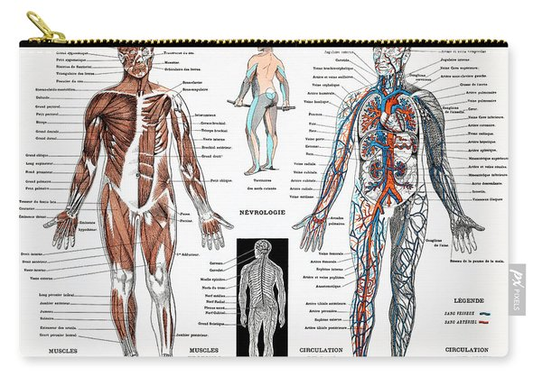 Human Nervous And Muscular System Carry-all Pouch