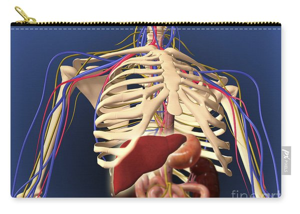 Human Skeleton Showing Digestive System Carry-all Pouch