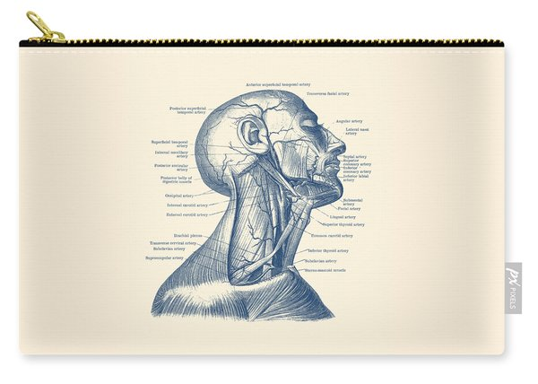 Human Venous And Circulatory Systems - Neck - Vintage Anatomy Carry-all Pouch