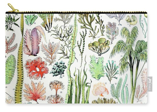 Illustration Of Algae And Seaweed  Carry-all Pouch