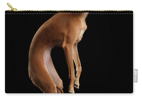 Carry-all Pouch featuring the photograph Italian Greyhound Dog Jumping, Hangs In Air, Looking Camera Isolated by Sergey Taran