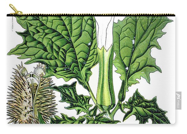 Jimson Weed, Devils Snare Or Datura, Hells Bells, Devils Tr Carry-all Pouch