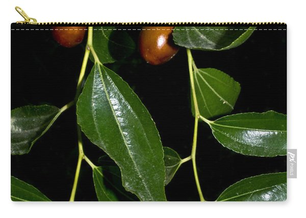 Jujube Fruits Carry-all Pouch