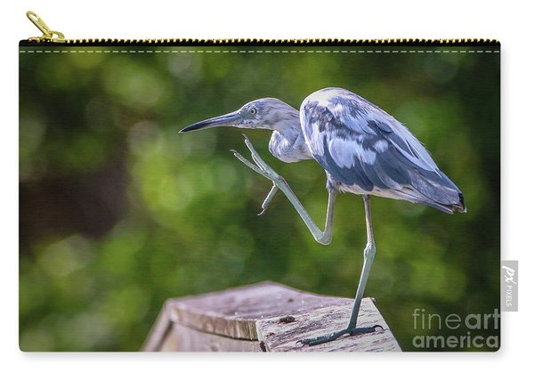 Carry-all Pouch featuring the photograph Juvenile Little Blue Heron by Tom Claud