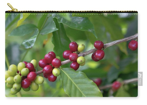 Kona Coffee Cherries Carry-all Pouch
