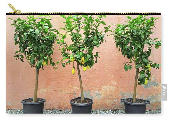Lemon Trees With Ripe Fruits Carry-all Pouch