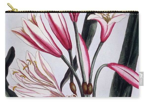 Long Leaved Amaryllis Carry-all Pouch