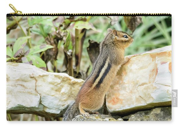 Lookout Carry-all Pouch