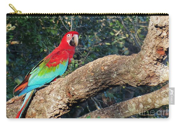 Macaw Resting Carry-all Pouch