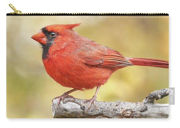 Male Cardinal In Fall Carry-all Pouch