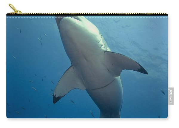 Male Great White Sharks Belly Carry-all Pouch