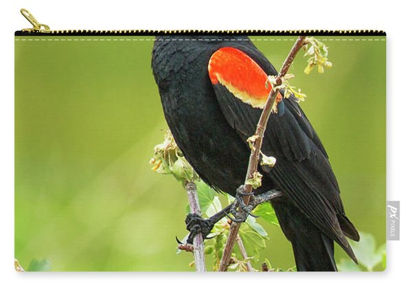 Male Red-winged Blackbird Carry-all Pouch