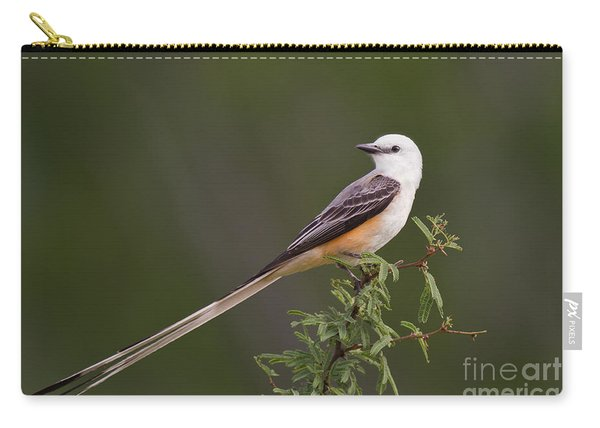 Male Scissor-tail Flycatcher Tyrannus Forficatus Wild Texas Carry-all Pouch