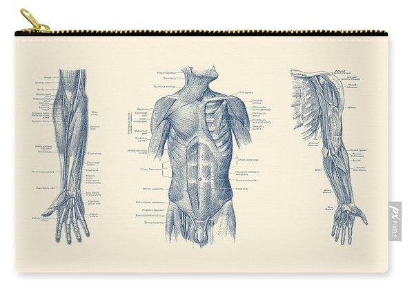 Male Upper Body Muscular System - Multi-view - Vintage Anatomy Carry-all Pouch
