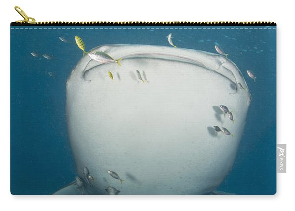 Massive Whale Shark With Golden Carry-all Pouch