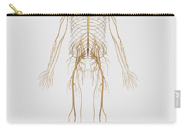 Medical Illustration Of Peripheral Carry-all Pouch