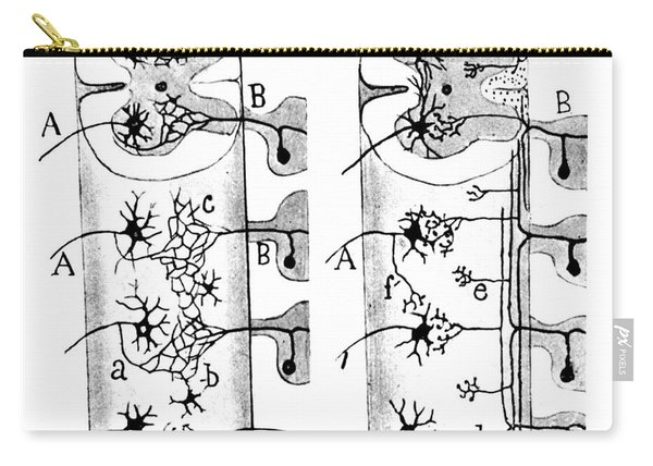 Neuroglia Cells Illustrated By Cajal Carry-all Pouch