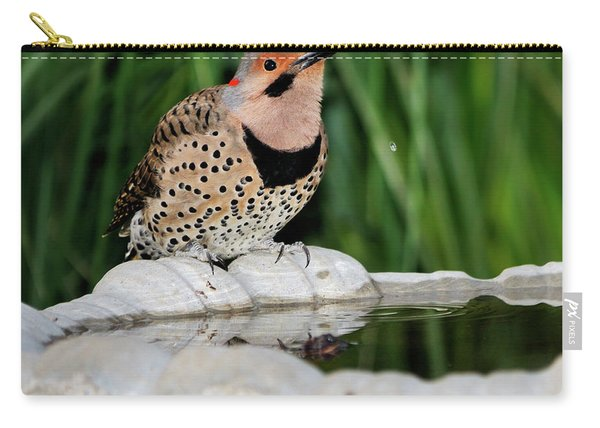 Northern Flicker Drinking Carry-all Pouch