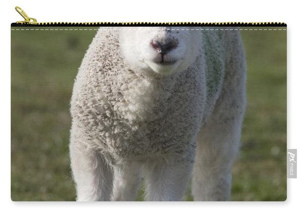 Northumberland, England A White Lamb Carry-all Pouch