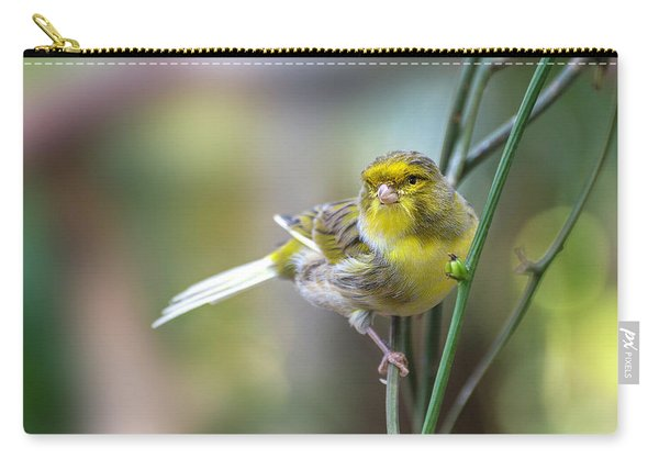 Orchard Oriole Carry-all Pouch