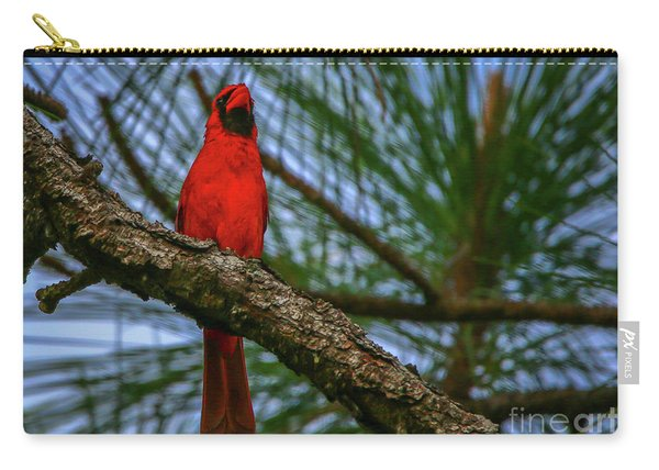 Carry-all Pouch featuring the photograph Perched Cardinal by Tom Claud