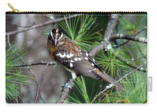 Perched In The White Pine Carry-all Pouch
