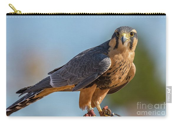 Peregrine Falcon Wildlife Art By Kaylyn Franks Carry-all Pouch