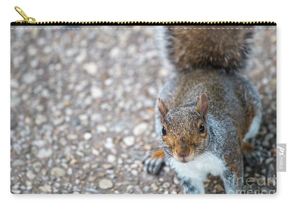 Photo Of Squirel Looking Up From The Ground Carry-all Pouch