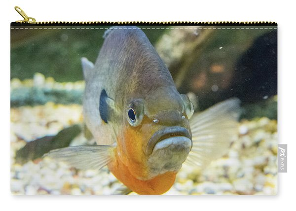Piranha Behind Glass Carry-all Pouch