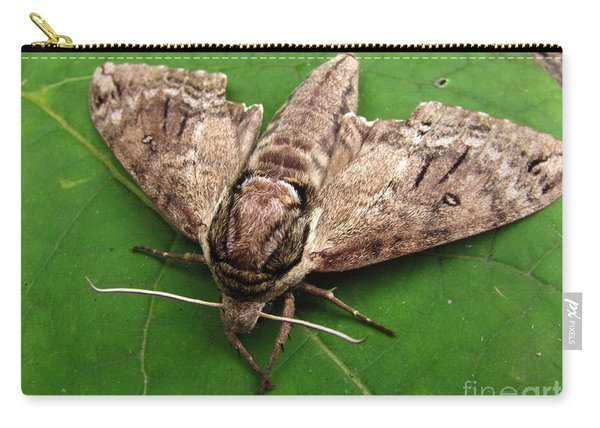 Plebeian Sphinx Moth Carry-all Pouch