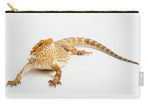 Carry-all Pouch featuring the photograph Pogona Isolated by Benny Marty