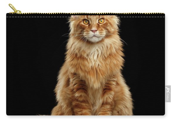 Portrait Of Ginger Maine Coon Cat Isolated On Black Background Carry-all Pouch