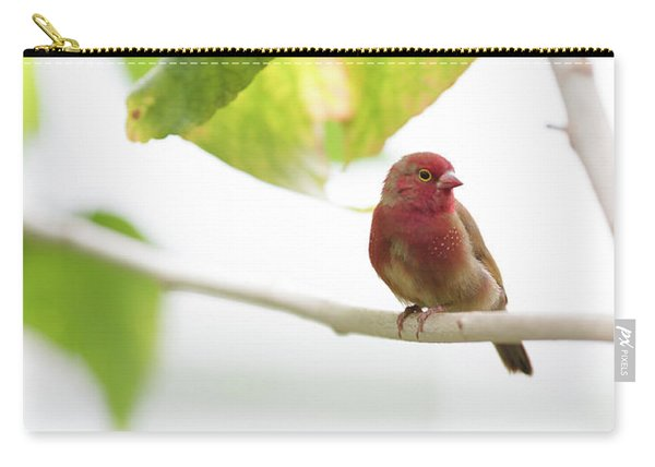 Carry-all Pouch featuring the photograph Red Bird by Raphael Lopez