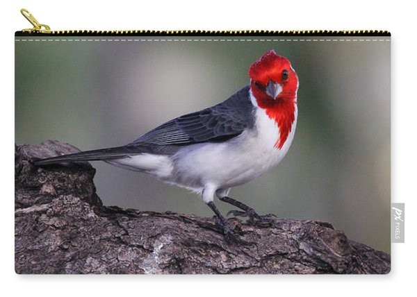 Red Crested Posing Carry-all Pouch