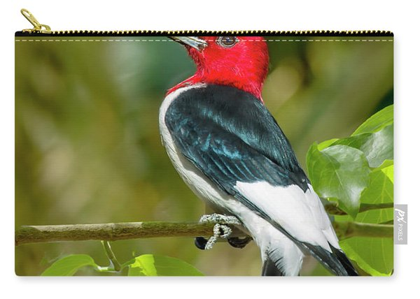 Red-headed Woodpecker Portrait Carry-all Pouch