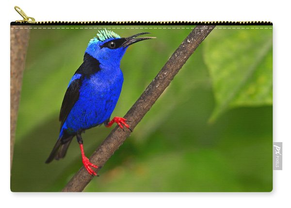Red-legged Honeycreeper Carry-all Pouch