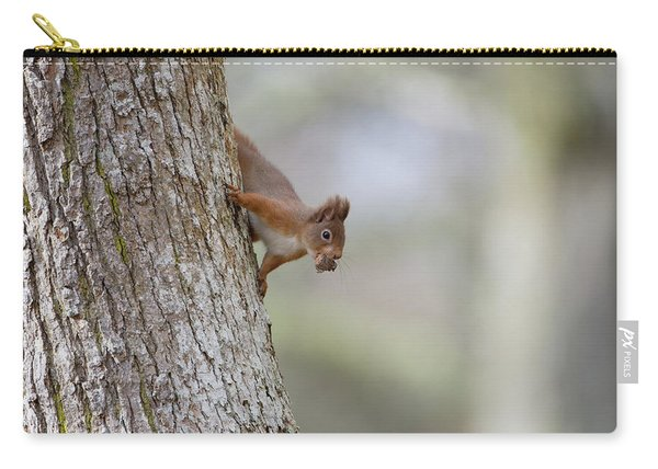 Red Squirrel Climbing Down A Tree Carry-all Pouch