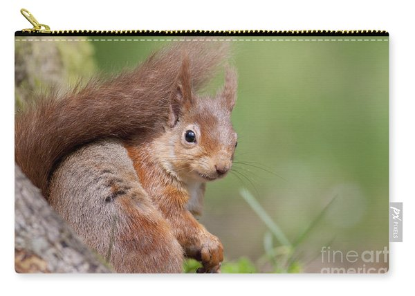 Red Squirrel - Scottish Highlands  #17 Carry-all Pouch
