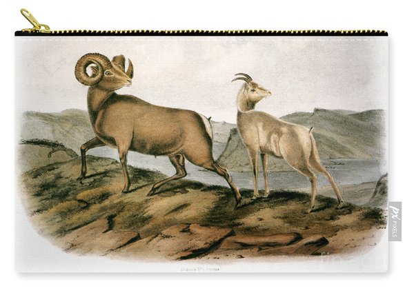 Rocky Mountain Sheep, 1846 Carry-all Pouch