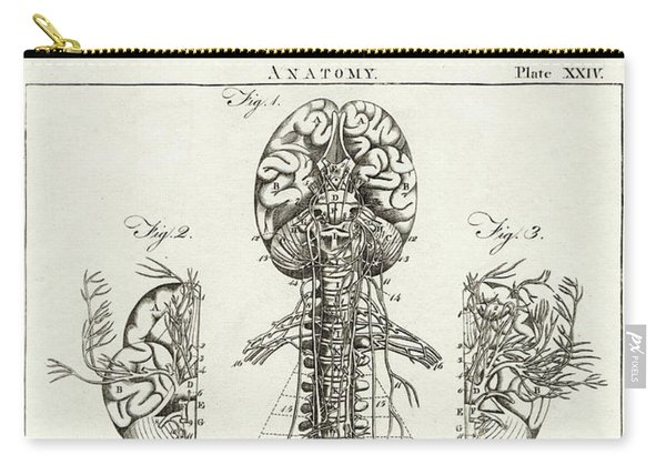 Scientific Diagram Of The Brain And Spinal Column Carry-all Pouch