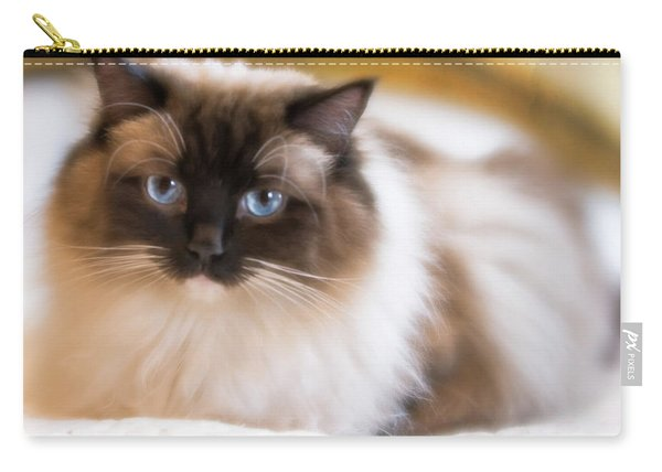 Seal Point Bicolor Ragdoll Cat Carry-all Pouch