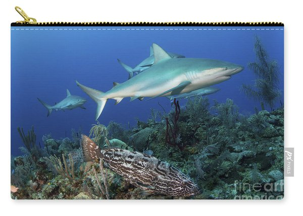 Several Caribbean Reef Sharks Carry-all Pouch